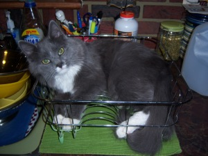 Cyber in the Dish Rack